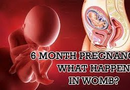 6 Month Pregnancy.  What Happens At 6 Months